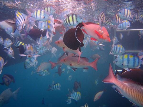 シュノーケリング 海の魚