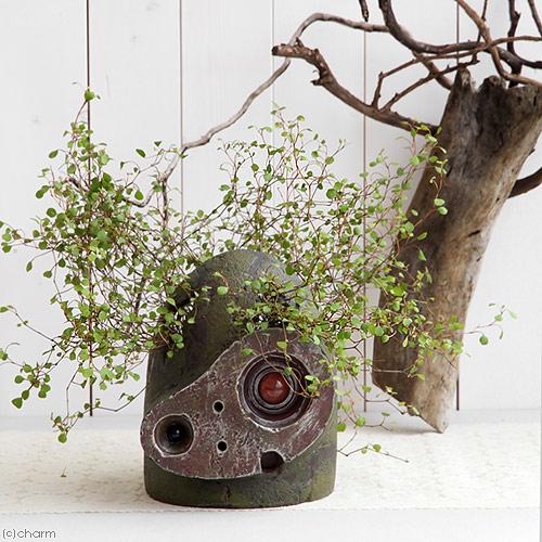 ジブリプランター観葉植物 天空の城ラピュタ ロボット兵1