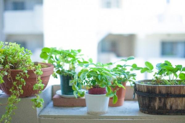 観葉植物や水槽に ラピュタのプランターが素敵!