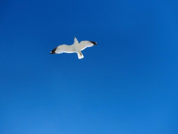 空_鳥_カモメ