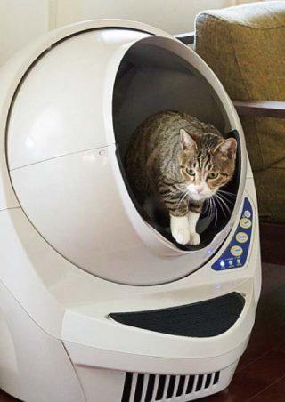 匂いが気になる猫のトイレの場所はココ!自動掃除で解決!